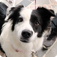 Adopt A Pet :: Oreo - Richmond, VA