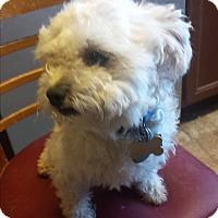 Adopt A Pet :: Popsicle - Lodi, CA