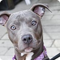 Adopt A Pet :: Stella - Cedar Rapids, IA