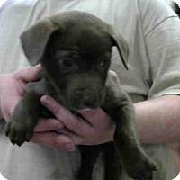 Adopt A Pet :: A272440 - Conroe, TX