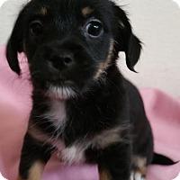 Adopt A Pet :: Kala - Stockton, CA