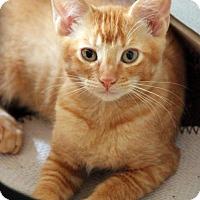 Adopt A Pet :: J. Peterman - Dallas, TX