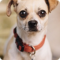 Adopt A Pet :: Cookies N' Cream - Portland, OR