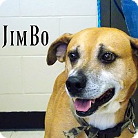 Adopt A Pet :: JimBo - Defiance, OH