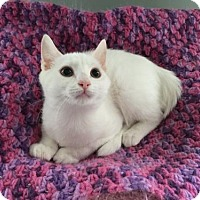 Adopt A Pet :: Abbey- Kitten - Harrisburg, PA