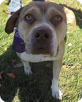 Terrier (Unknown Type, Medium) Mix Dog for adoption in Detroit, Michigan - Dulcinea