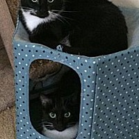 Adopt A Pet :: Dora and Twinkle - Novato, CA
