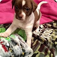 Adopt A Pet :: Pluto - Milton, GA