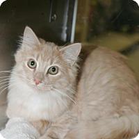 Adopt A Pet :: Elliott - Capshaw, AL