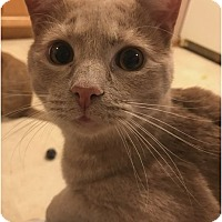 Adopt A Pet :: Aiden - Cleveland, OH