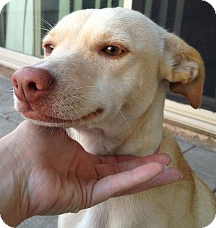 Whippet Mix Dog for adoption in Vista, California - Ruby