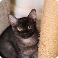 Adopt A Pet :: Truffle - Chicago, IL