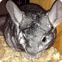 Adopt A Pet :: Rudy - Titusville, FL