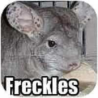 Adopt A Pet :: Freckles - Virginia Beach, VA