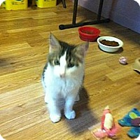 Adopt A Pet :: Miles - Monroe, GA