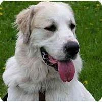 Adopt A Pet :: Rylynn - Rigaud, QC