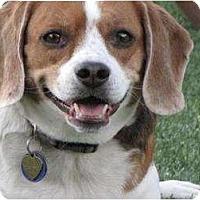 Adopt A Pet :: Baileys - Phoenix, AZ