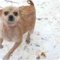 Adopt A Pet :: One Hot Tamale (Tina) - Antioch, IL