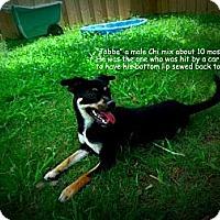 Adopt A Pet :: Jabba - Gadsden, AL