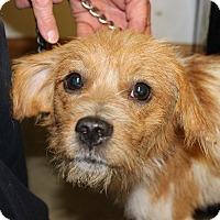 Adopt A Pet :: Tramp - Brattleboro, VT