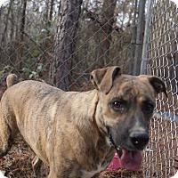 Adopt A Pet :: Roxie - Buhl, AL