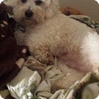 Adopt A Pet :: Claude - Lodi, CA