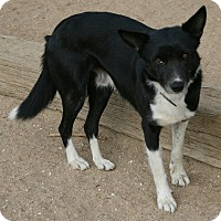 Adopt A Pet :: TIM - San Pedro, CA