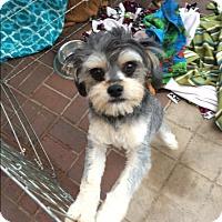 Adopt A Pet :: Pickles - Livermore, CA