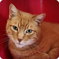 Adopt A Pet :: Adoption Pending - Ricky - Pleasant Hill, CA