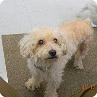 Adopt A Pet :: PEACHES - Sandusky, OH