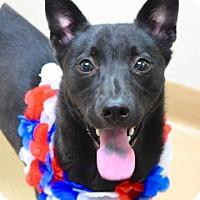 Adopt A Pet :: Dinah - Dublin, CA