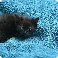 Adopt A Pet :: Sparrow - Houston, TX