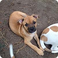 Adopt A Pet :: Fiona - Groveland, FL