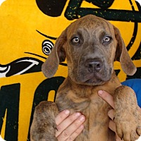 Adopt A Pet :: King - Oviedo, FL