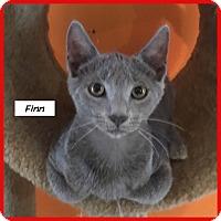 Adopt A Pet :: Finn - Miami, FL