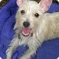 Adopt A Pet :: Sabrina - Richardson, TX