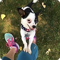 Adopt A Pet :: JoJo - Grand Rapids, MI