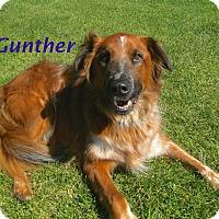 Adopt A Pet :: Gunther - El Cajon, CA