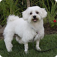 Adopt A Pet :: DOVER - Newport Beach, CA