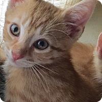 Adopt A Pet :: Spencer - Horsham, PA
