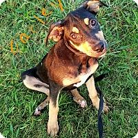 Adopt A Pet :: Carley - Lawrenceburg, TN