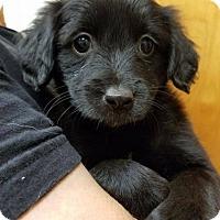 Adopt A Pet :: Blossom - Ft. Lauderdale, FL