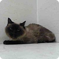 Adopt A Pet :: SKI - Orlando, FL