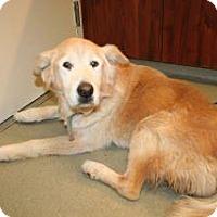 Adopt A Pet :: Rodney - Wildomar, CA