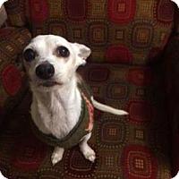 Adopt A Pet :: Joey - Mission, KS