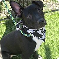 Adopt A Pet :: Henley - Cumming, GA