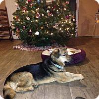 Adopt A Pet :: Lucas - Washington DC, DC