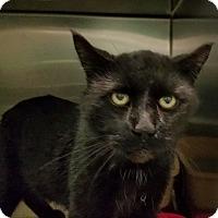Adopt A Pet :: Giulio - Elyria, OH
