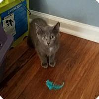 Adopt A Pet :: Yin - Wilmington, NC