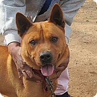 Adopt A Pet :: Chico - Conyers, GA